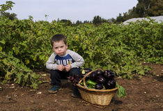 Toddler boy at vegetables self-picking Stock Photos