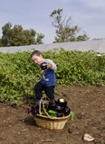Toddler boy at vegetables self-picking Royalty Free Stock Images