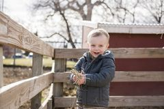 Toddler Boy Visiting a Local Urban Farm and Feeding the Cows Stock Images