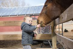 Toddler Boy Visiting a Local Urban Farm and Feeding the Horses w Royalty Free Stock Image