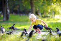 Toddler boy walking in the park and feeding pigeons Stock Photography