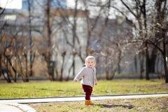 Toddler boy walking at the warm spring day Royalty Free Stock Photo