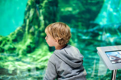 Toddler boy watches fishes in aquarium Royalty Free Stock Photo