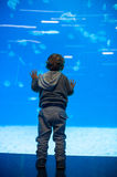 Toddler boy watches fishes in aquarium Royalty Free Stock Photography