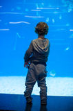 Toddler boy watches fishes in aquarium Royalty Free Stock Image