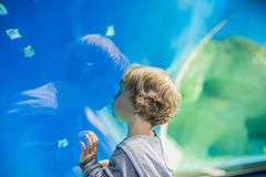 Toddler boy watches fishes in aquarium Stock Images