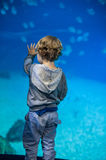 Toddler boy watches fishes in aquarium Royalty Free Stock Photos