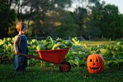 Boy with wheelbarrow of gourds stock images