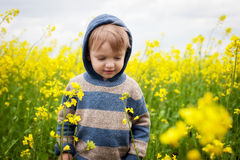 Toddler in canola Stock Images