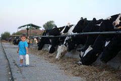 Toddler carrying his milk from farm Stock Photos