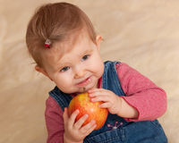 Toddler in casual eating a big red apple Royalty Free Stock Image