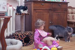 A toddler child is sitting on a potty. Surrounded by pets Stock Photo