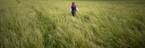 Toddler child walking through a meadow of high green grass Stock Image