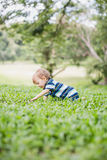Toddler crawling in the garden and exploring backyard Royalty Free Stock Image