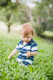 Toddler crawling in the garden and exploring backyard Royalty Free Stock Photos