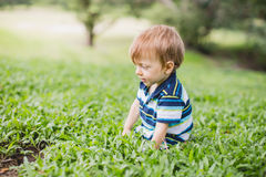 Toddler crawling in the garden and exploring backyard Royalty Free Stock Photography