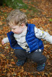 Toddler crouching down. Small blond boy wearing a blue body warmer and beige jumper crouching down among the orange colored Autumn leaves in Tollymore Forest stock photography