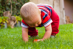 Toddler discovering nature Royalty Free Stock Photos
