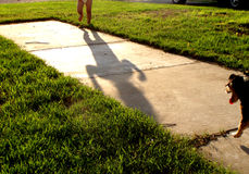 Toddler and dog. Legs of a Caucasian toddler with shadow on cement approaching a dog outdoors Royalty Free Stock Images