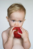 Toddler Eating Apple. Image of cute toddler eating an apple Royalty Free Stock Photos