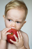 Toddler Eating Apple. Image of cute toddler eating an apple stock photography