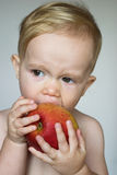 Toddler Eating Apple. Image of cute toddler eating an apple Royalty Free Stock Photo