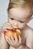 Toddler Eating Apple. Image of cute toddler eating an apple stock image