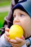 Toddler eating an apple royalty free stock photo