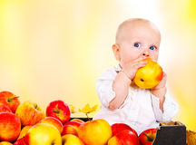 Toddler eating autumnal apples Stock Images