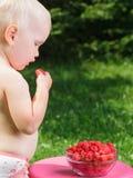Toddler eating raspberries in a summer garden Royalty Free Stock Photos