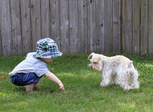 Toddler and Family Dog Stock Images