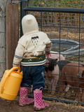 Toddler on the Farm Stock Photos
