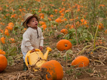 Toddler on the Farm stock image