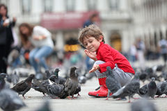 Toddler feeding the pigeons Stock Photography