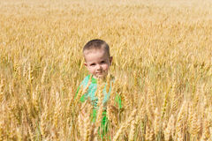 Toddler in the field of wheat Stock Images