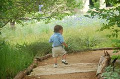 Toddler follows path to Bluebonnets. Toddler walks down path stock image