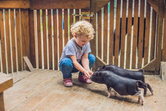 Toddler girl caresses and feeds pig piglet in the petting zoo. c. Oncept of sustainability, love of nature, respect for the world and love for animals. Ecologic stock photo