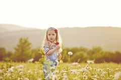 Toddler girl   in daisy field Royalty Free Stock Photos