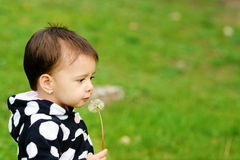 Toddler girl  with dandelion Royalty Free Stock Photos