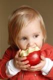 Toddler girl eating apple. Toddler girl eating large red apple Royalty Free Stock Image
