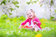 Toddler girl eating strawberry in blooming garden Royalty Free Stock Images