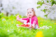 Toddler girl eating strawberry in blooming garden Stock Photos