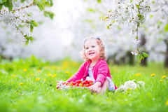 Toddler girl eating strawberry in blooming garden Stock Images