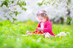 Toddler girl eating strawberry in blooming garden Royalty Free Stock Photo