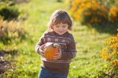 Toddler girl harvesting orange pumpkin. Cute little girl working at family farm, countryside. Little gardener in the garden, autumn harvest, fall season Royalty Free Stock Photo