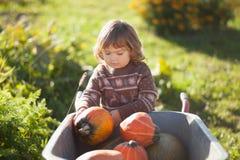 Toddler girl harvesting orange pumpkins at the wheelbarrow. Cute little girl working at family farm, countryside. Little gardener in the garden, autumn harvest Stock Photo