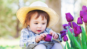 Toddler girl in a hat playing with tulips. Happy toddler girl in a hat playing with purple tulips outside in spring Royalty Free Stock Photo