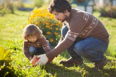 Toddler girl and her father harvesting orange pumpkin. Father and child working at family farm, countryside. Little gardener in the garden, autumn harvest, fall Royalty Free Stock Photography