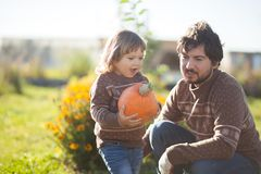 Toddler girl and her father harvesting orange pumpkin. Father and child working at family farm, countryside. Little gardener in the garden, autumn harvest, fall Stock Photos