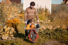 Toddler girl and her father harvesting orange pumpkins at the garden. Family working at the farm, countryside. Toddler gardener in the garden, autumn harvest Royalty Free Stock Images